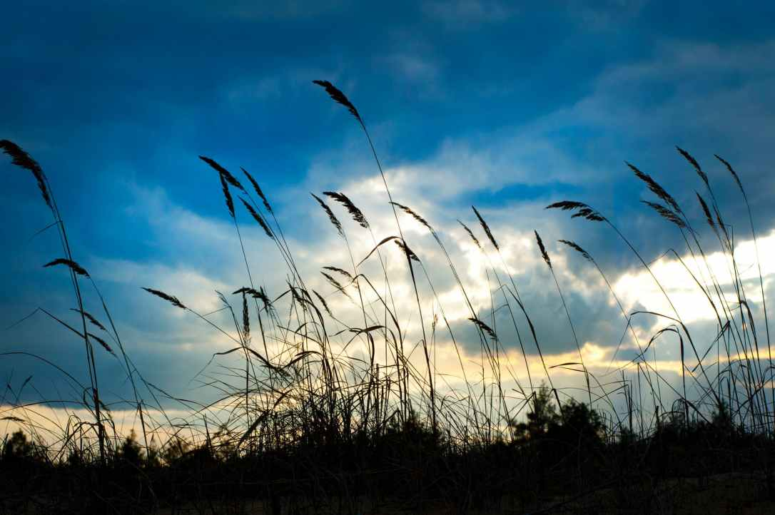clouds daylight field grass